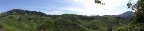 roman étranger, Malaisie, mémoire, jardin japonais